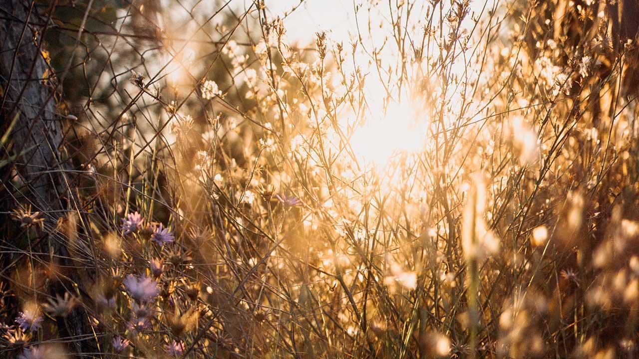 Sonnenlicht scheint durch Blumen auf einer Wiese und durch Gitternetz
