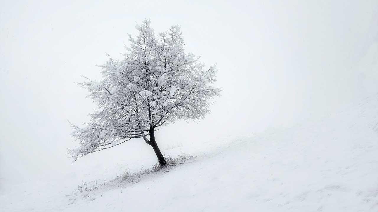 Verschneite Landschaft mit Hügel und Baum