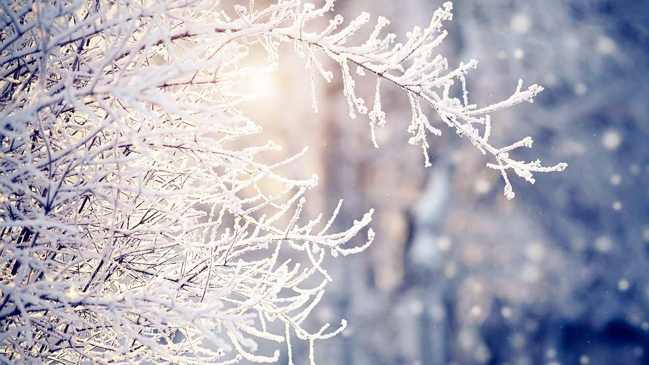Raureif an Zweigen im Winter