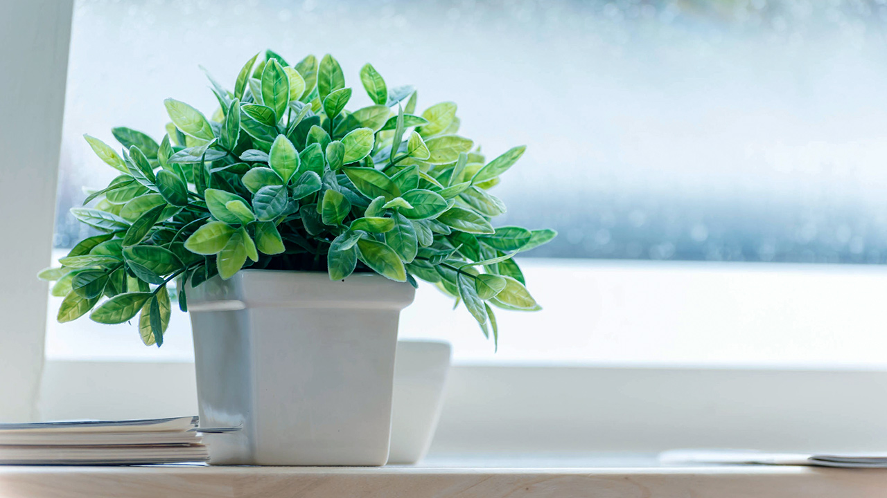 Zimmerpflanze in der kalten Jahreszeit