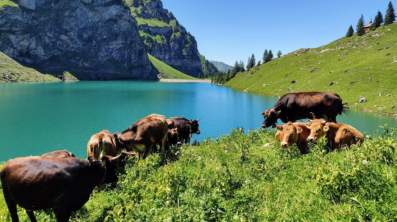 Bergeinsatz in den Alpen | (c) unsplash