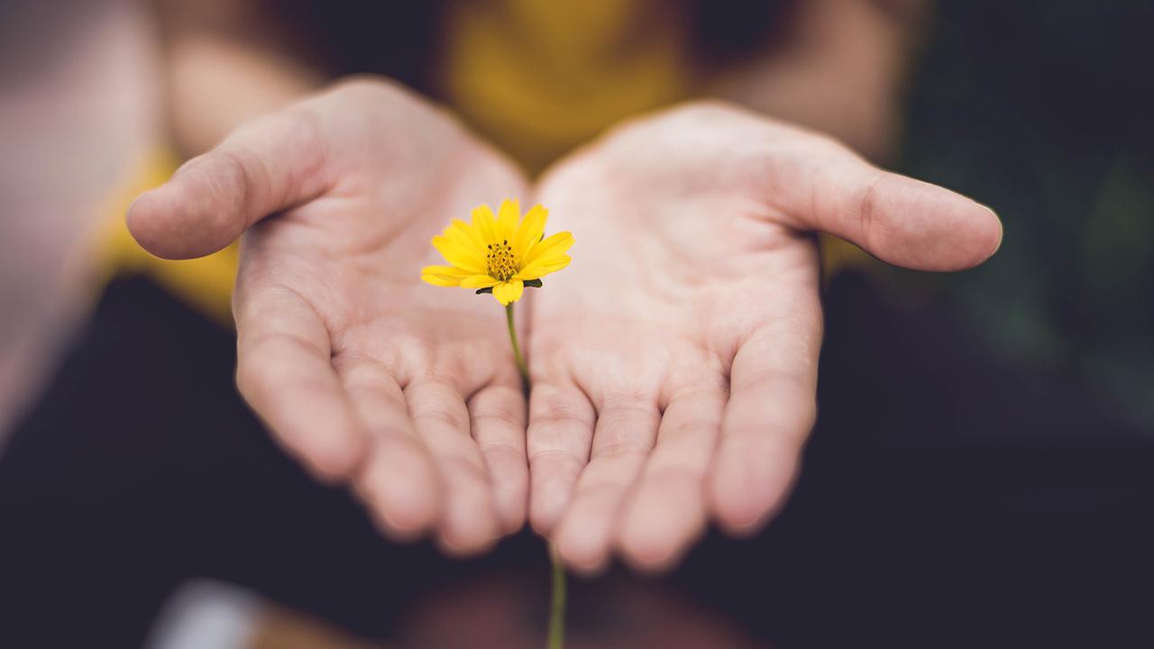 Zwei Hände, die eine Blume hinstrecken.