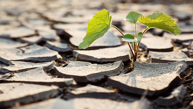 kämpferisch Pflanze (c) Fotolia