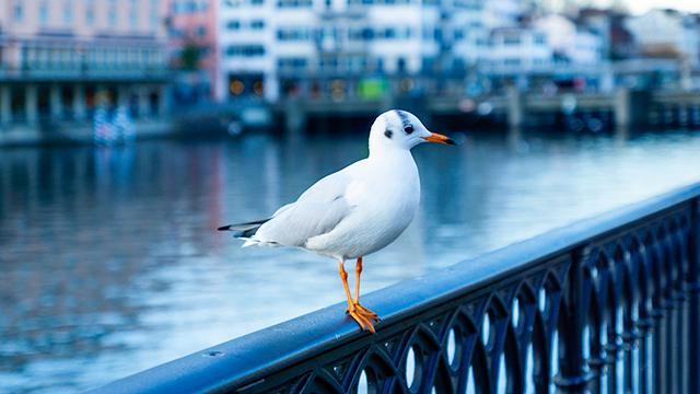 Vogel auf dem Geländer