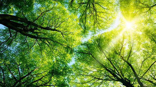 Sonnenlicht in Bäumen