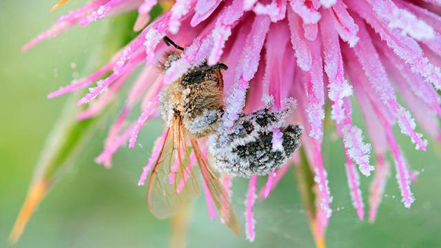 Biene, Blume, Frost