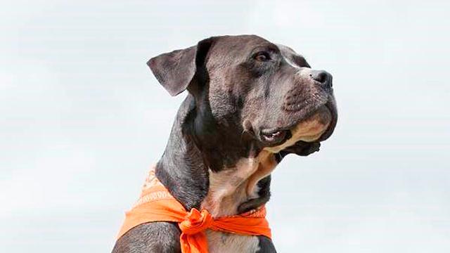 Therapiehund Eliot