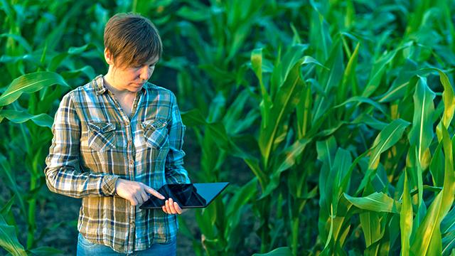 Agronomin im Maisfeld