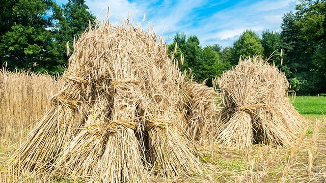 Getreidegarben
