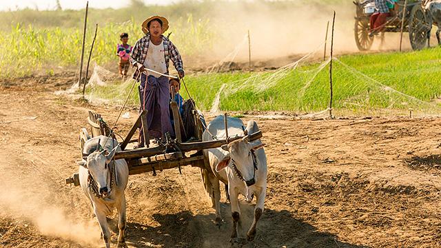 Bauer in Myanmar