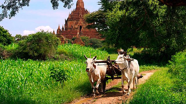 Wagen mit Tempel im Hintergrund