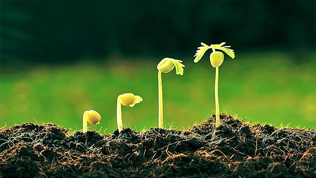 Wachstum eines Pflänzchens
