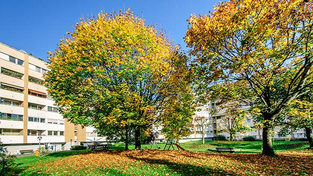 Siedlung mit Bäumen