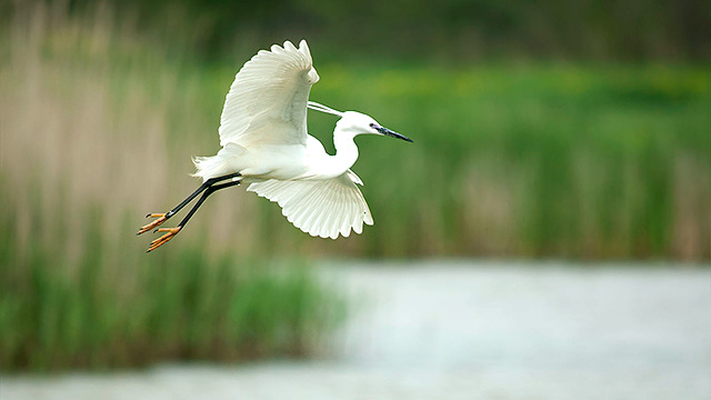 Flug in die Freiheit