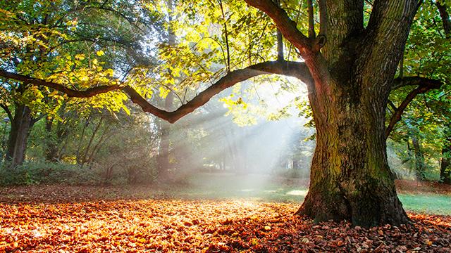 Baum mit Lichtstrahlen im Wald