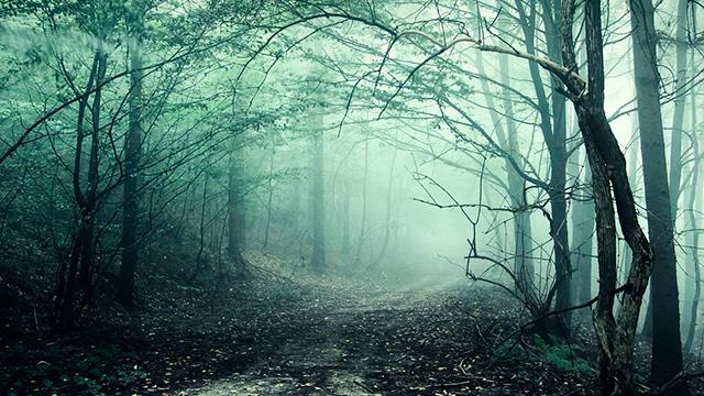 Düstere Stimmung im Wald